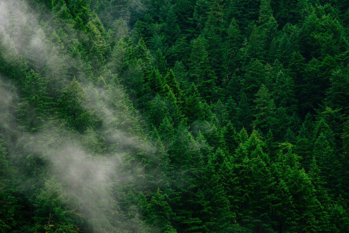 Die Entstehung vom Waldbüro